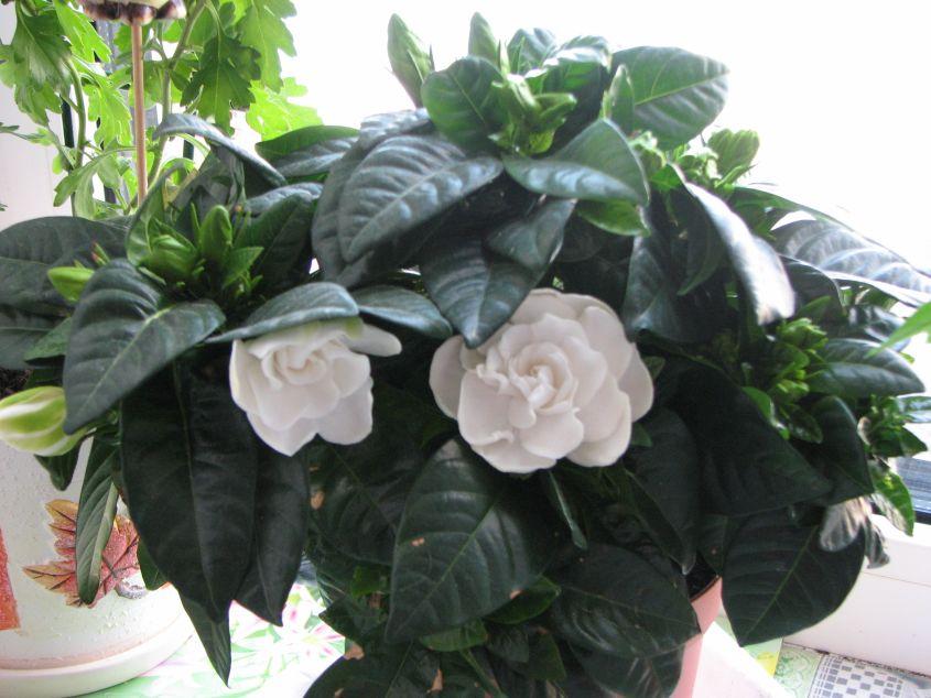 Благоприятные комнатные цветы для дома с