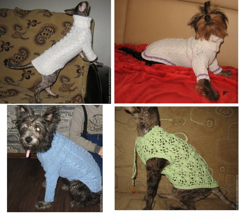 Вязание кофта для кошки 44